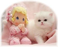 Copper Eyed White Persian, doll-face persian, Persian kittens for sale, Persian kittens