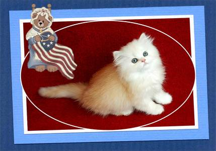 White Toy Persian