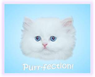 Traditional persian cat health