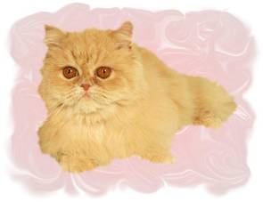 Cream Teacup Persian